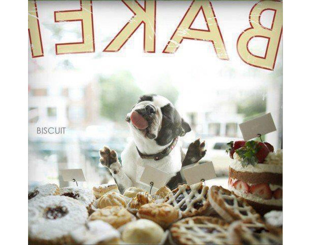 Dog-Bakery.jpg