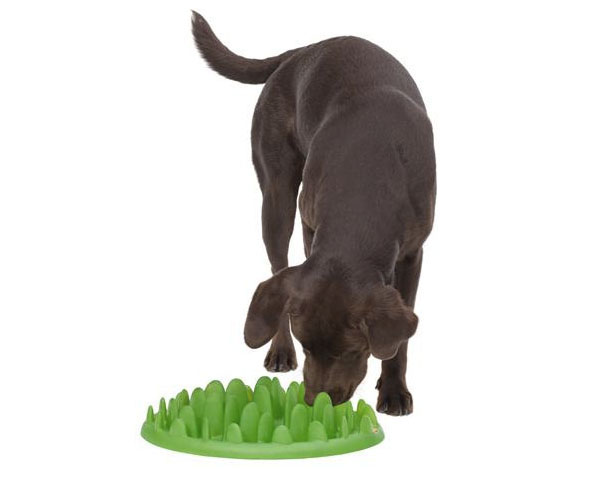 Green-interactive-dog-feeder.jpg