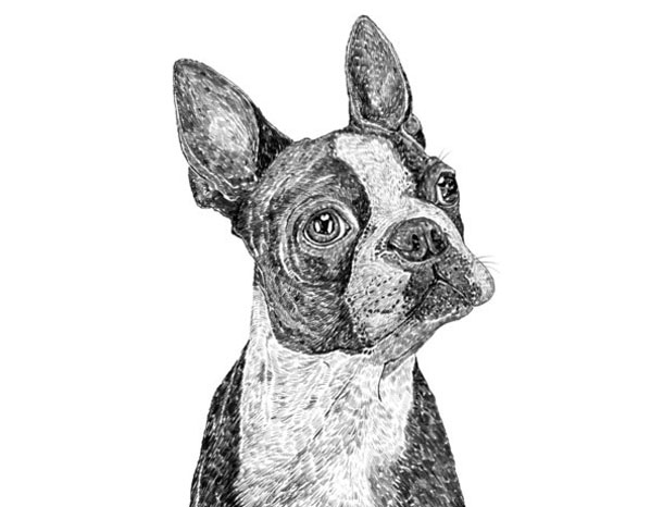 Ros_Shiers_Boston_Terrier_Art_1.jpg