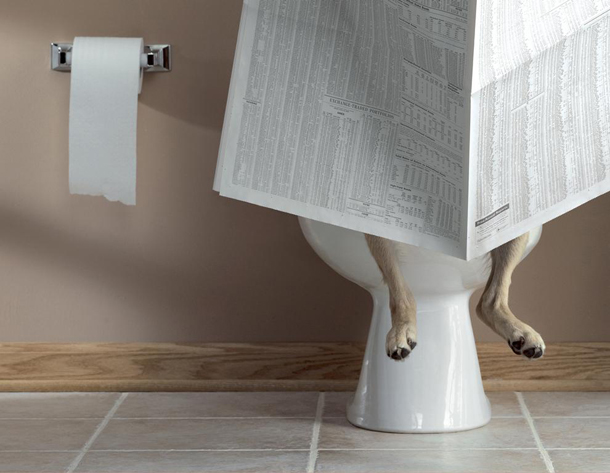 Dog-on-toilet.jpg
