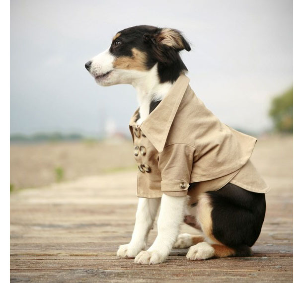 Dog-Trench-Coat-1.jpg