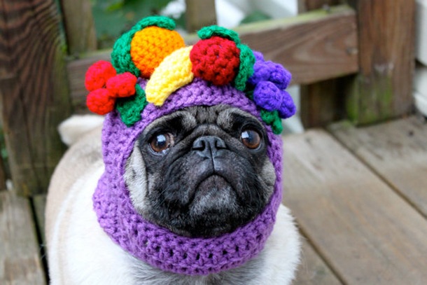 Fruit-dog-hat-1.jpg