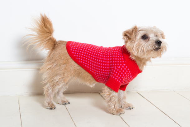 Stella-Raglan-Sweater-by-Ruby-Rufus-PetsPyjamas.com.jpg