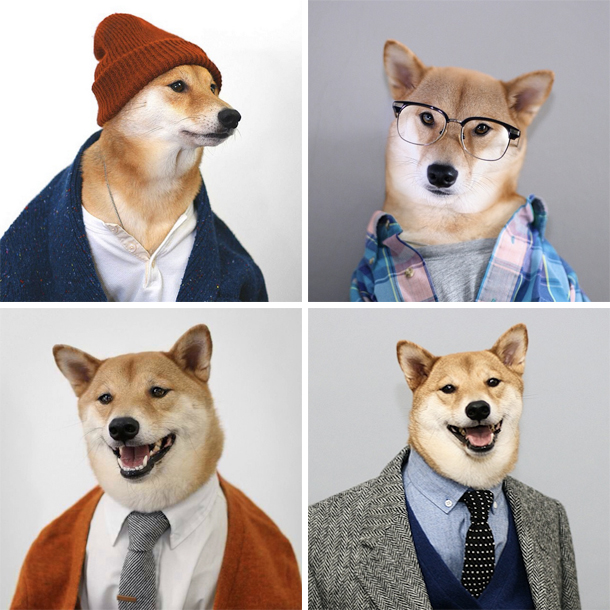 Menswear-Dog-Montage.jpg