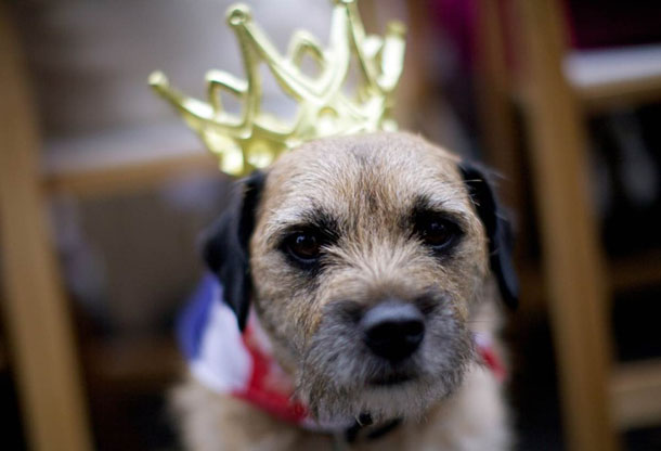 Jubilee-Party-Dog.jpg