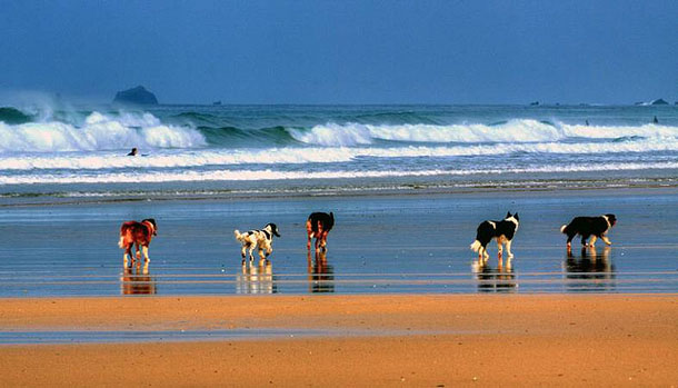 Phileas-Feature-Dogs-On-Beach.jpg