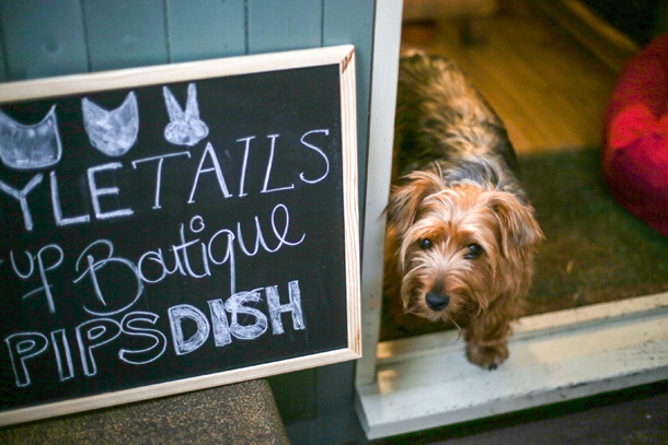 Pipdish_StyleTails_Dog_Friendly_Lunch_8.jpg