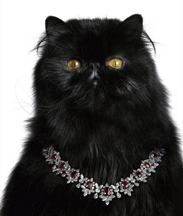 Catarama_Black_-Cat_1.jpg