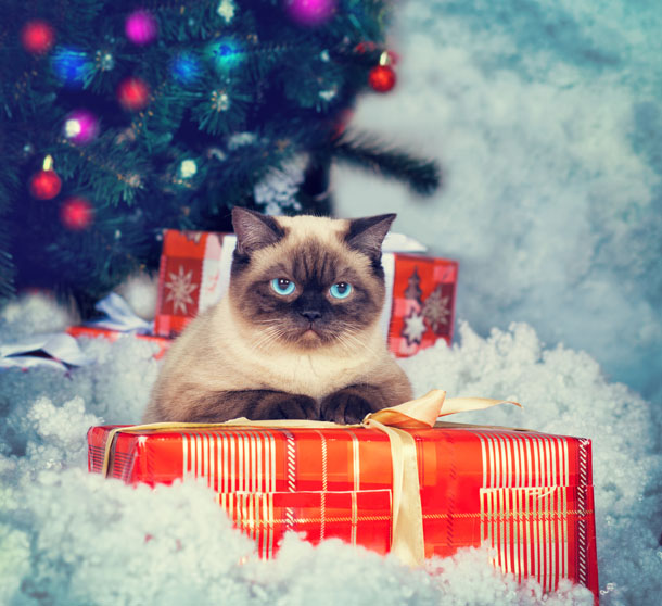 Christmas_Gifts_For_Cats.jpg